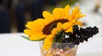 Sonnenblume in Glasvase