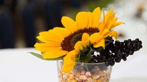 Sonneblume im Dekoglas